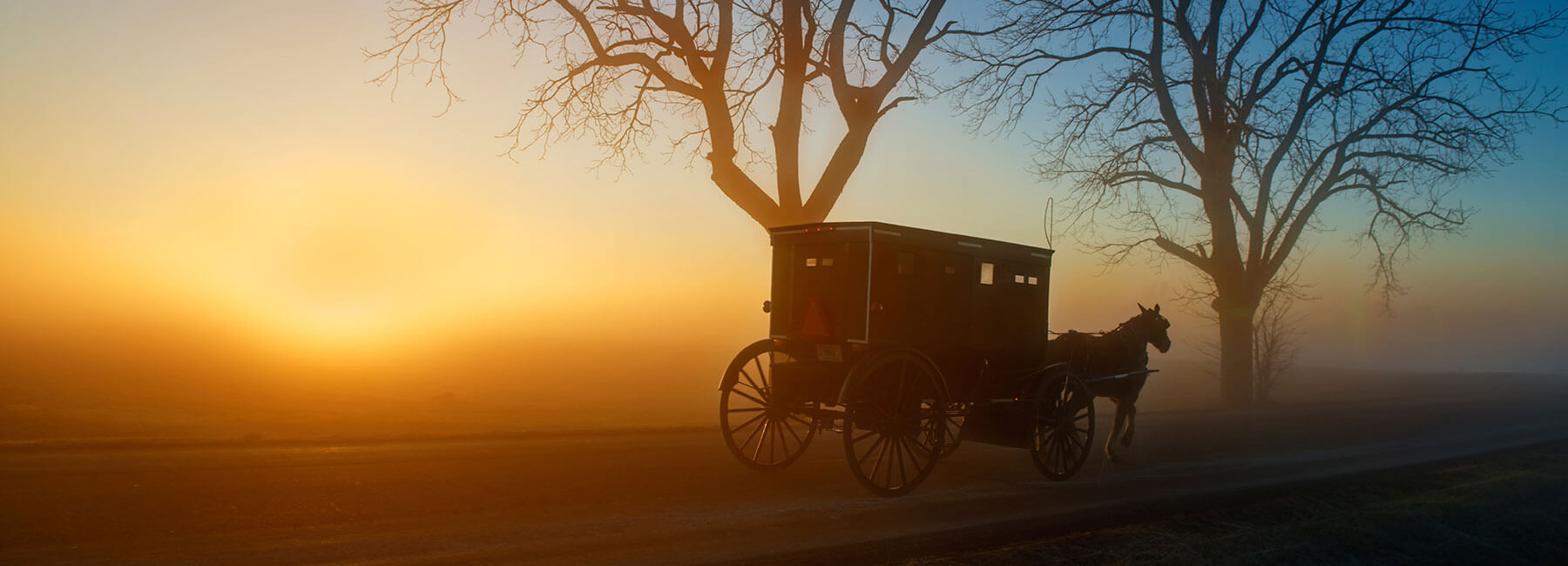Elkhart Amish Buggy at Dawn