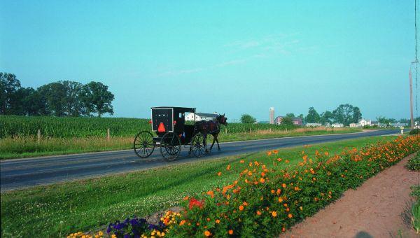 Elkhart Amish Buggy