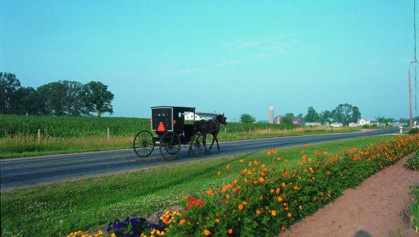 Elkhart Amish Buggy