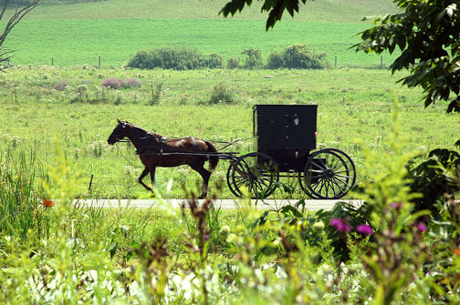 LaGrange Amish Buggy