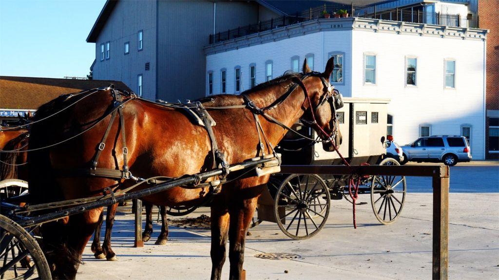 Shipshewana horse and buggy