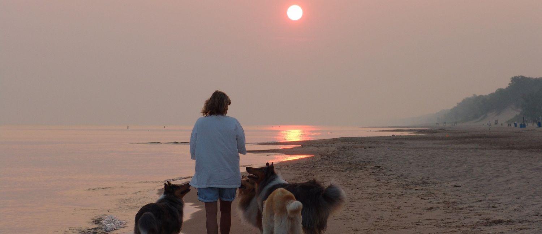Dune sunrise, dogs