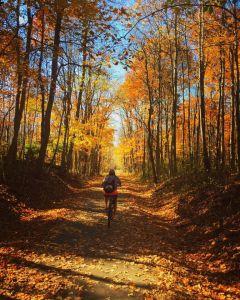 Pumpkinvine Nature Trail in fall
