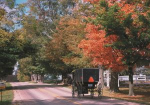 Amish buggy on heritage trail in fall