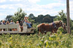 Orchards, Farms and Markets