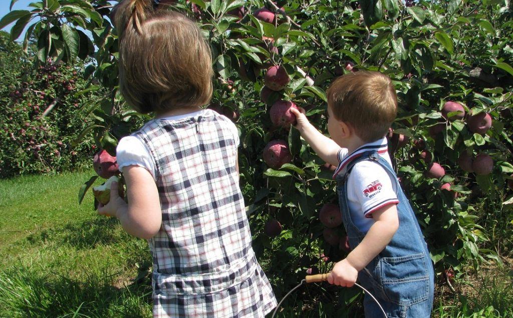 Kercher's Orchard