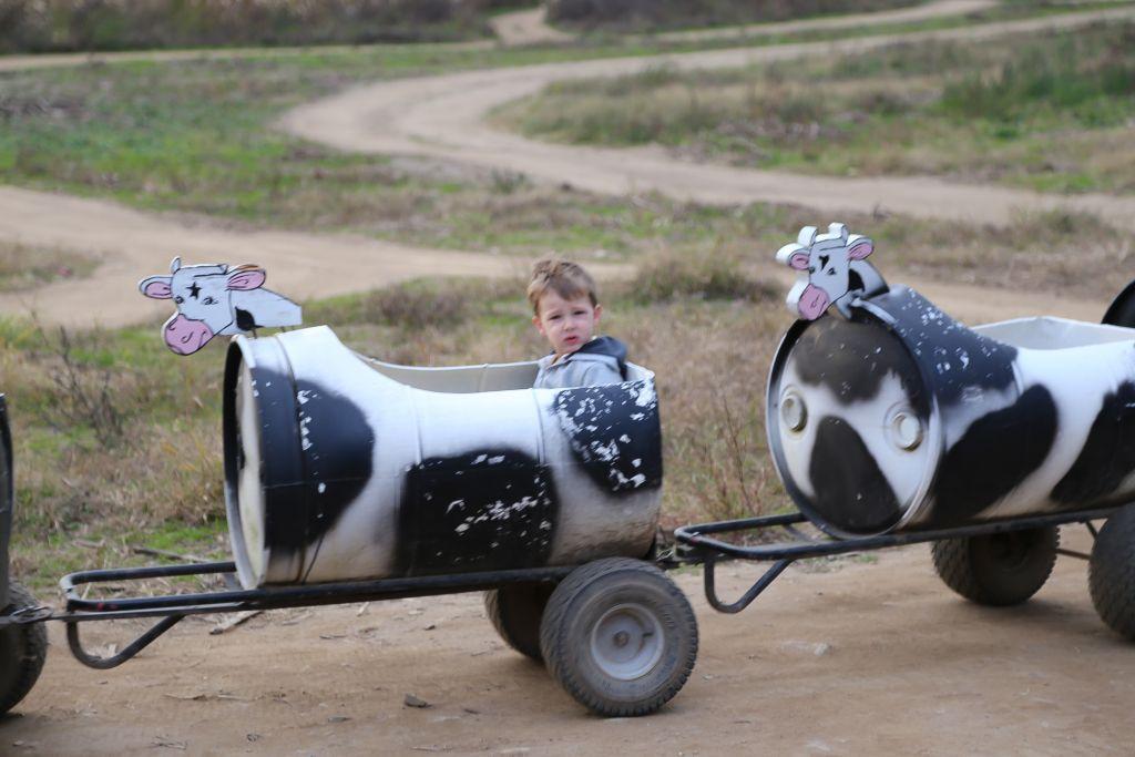 Cow Train at Thistleberry Farm